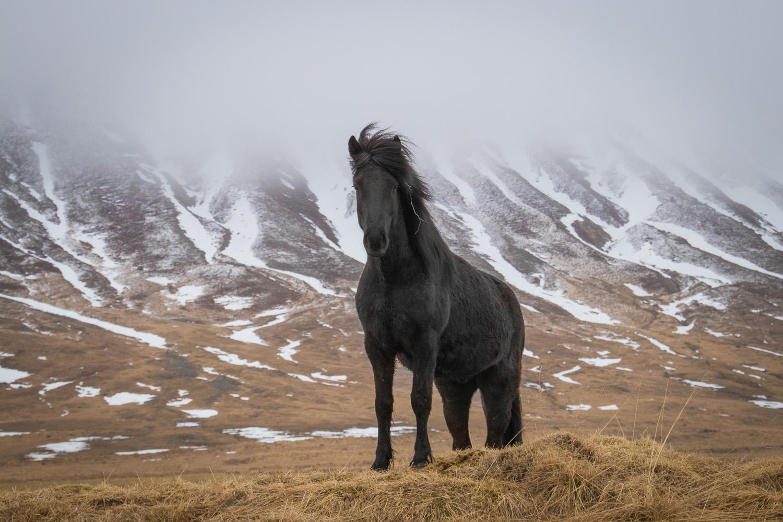 IJsland8